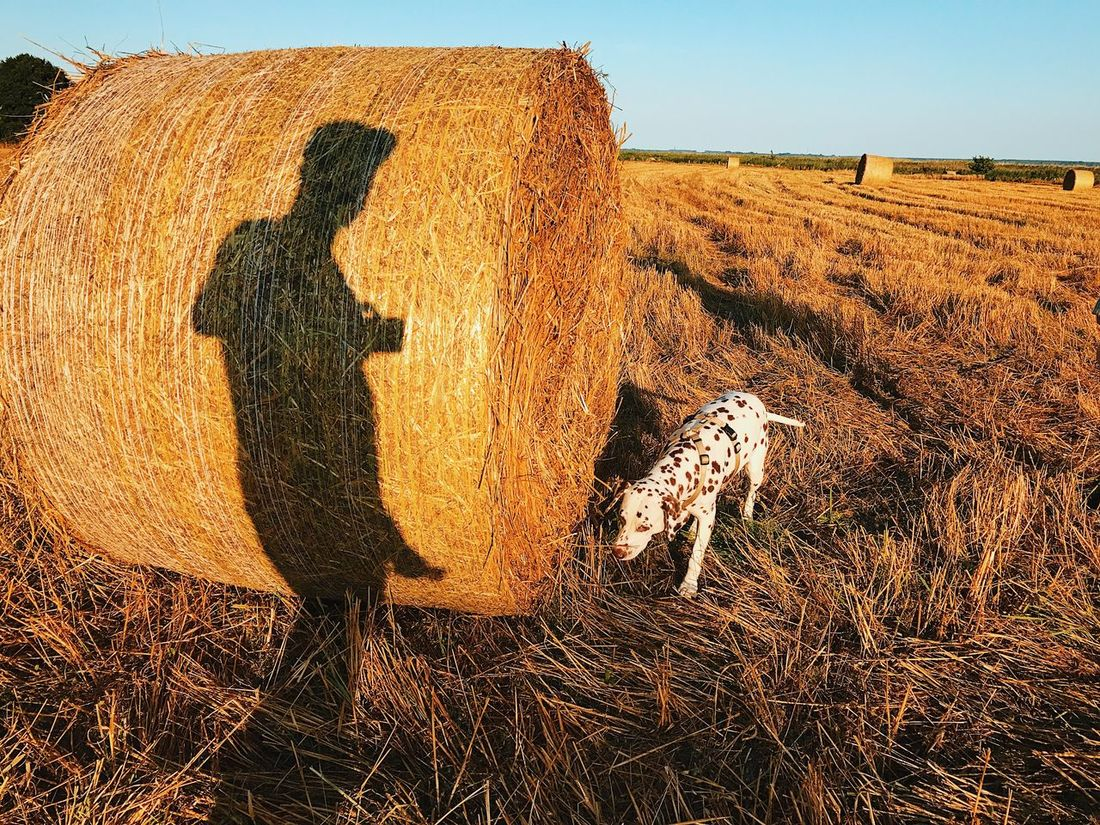 Field Hay Agriculture Outdoors No People Day Nature Grass Hay Bale Animal Themes Sky Sunset Sunset_collection