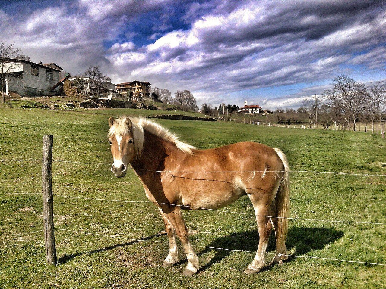 Horse Animal Themes