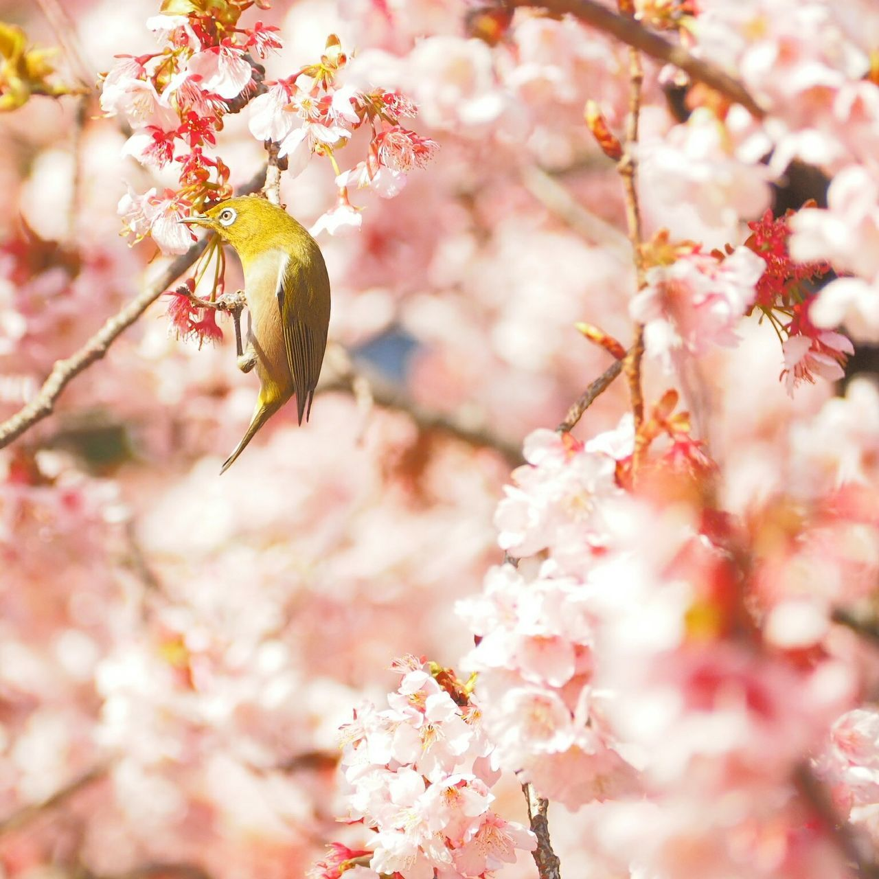 Beautiful stock photos of garden, Animal Themes, Animal Wildlife, Animals In The Wild, Beauty In Nature