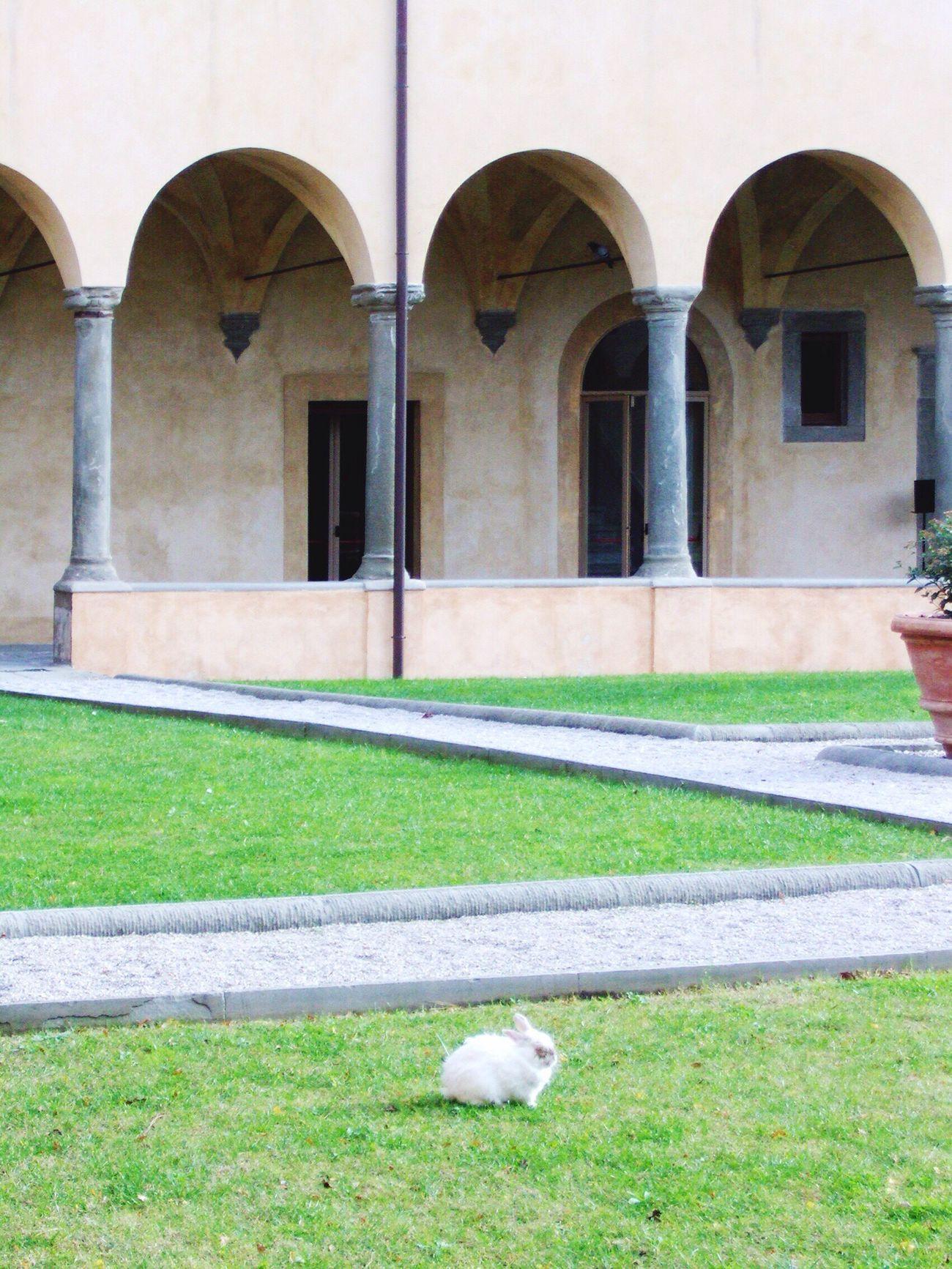 Coniglio. Architecture Animal Themes One Animal No People Pets Day Outdoors Scenics Pisa Rabbit Rabbits 🐇 Grass Monastery Italia Italy❤️ Kaninchen
