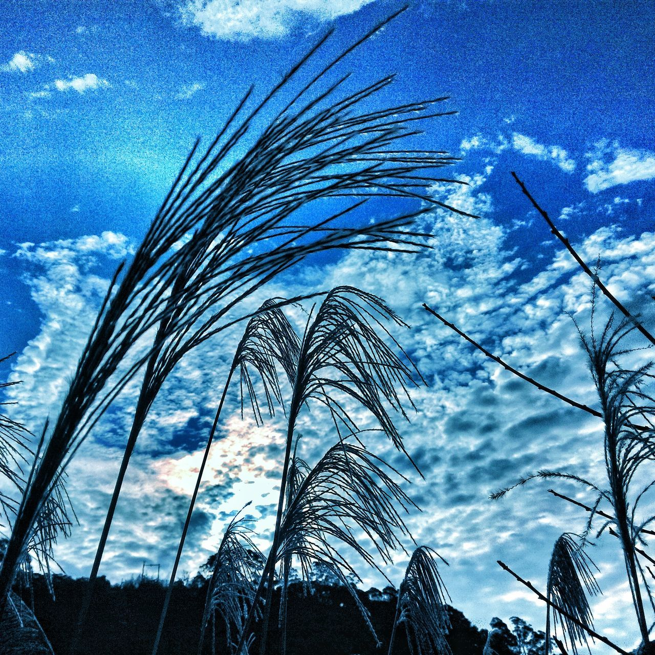 sky, low angle view, growth, nature, cloud - sky, day, no people, outdoors, blue, beauty in nature, plant, close-up