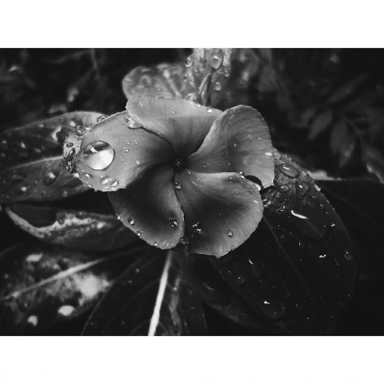 ▪ Bw ▪ Flowers ▪ Vscofeatures ▪ Waterdrop ▪ bestofvsco ▪ vscodaily ▪ vscofocus ▪ vscobrasil ▪ vscophile ▪ vscofilm ▪ vscoonly ▪ vscoboss ▪ afterlight ▪ nature ▪