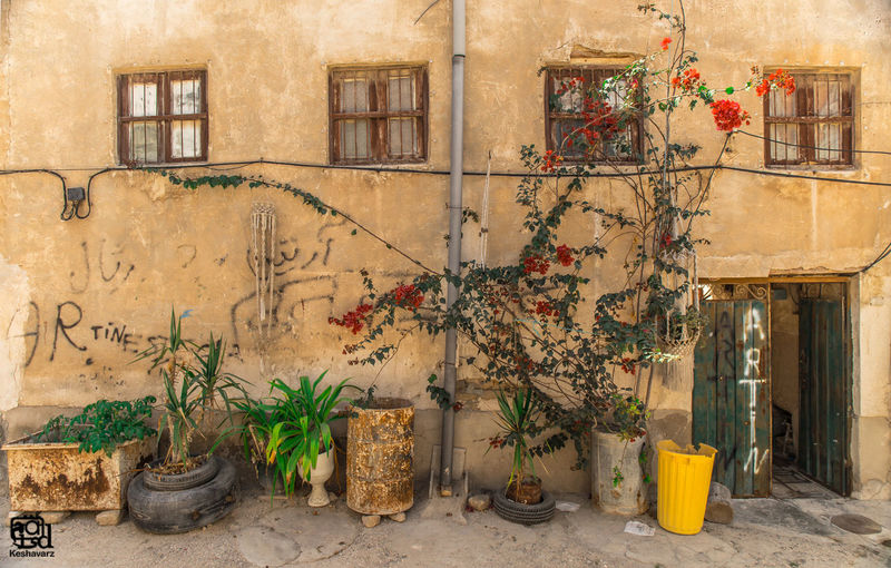 Without you, in a moonlit night again I passed through that lane My entire being turned into eyes For seeking you in that paradise The anticipated joy for seeing yo THE LANE BY: Freydoon Moshiri Alley Boushehr Flowers Iran Traditional Urban Urban Lifestyle Urbanphotography