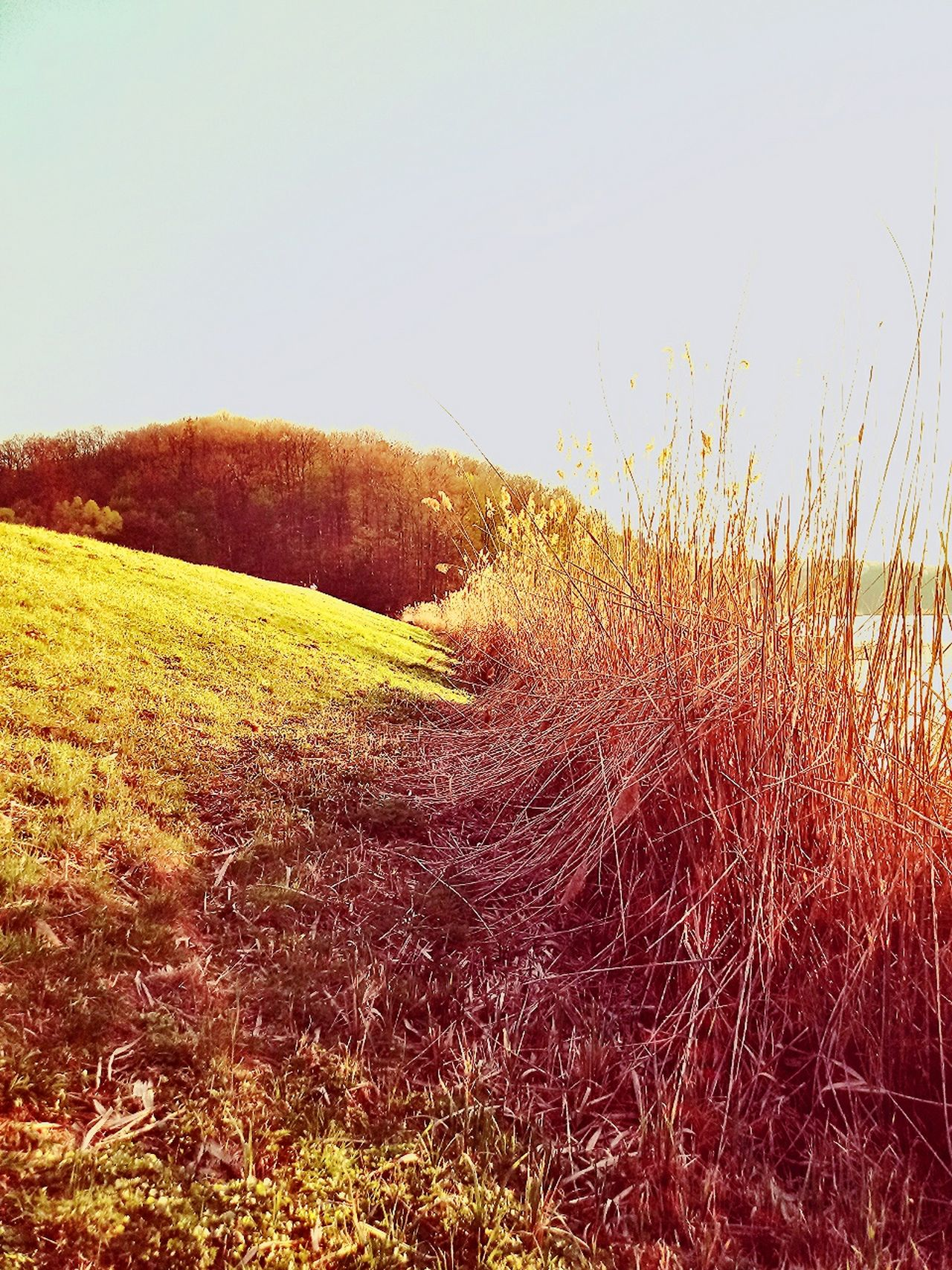 Nature Grass Field No People Growth Outdoors Sky Day Landscape Rural Scene Beauty In Nature Forest Mountain Walking Water Sunsetcolors Sunset Sun