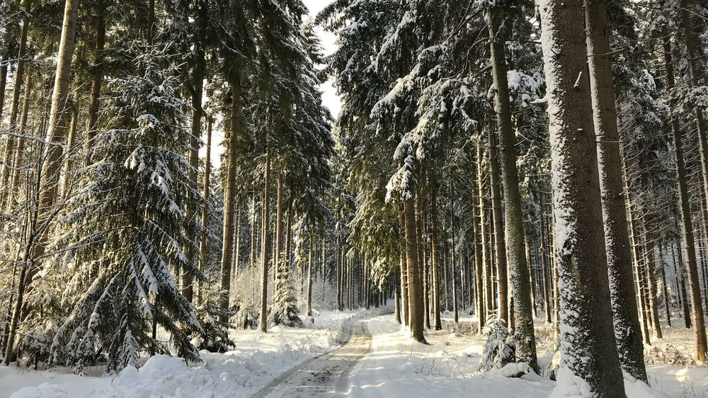Harz Mountains, Germany Beauty In Nature Cold Temperature Forest Landscape Nature Outdoors Snow Tree Winter