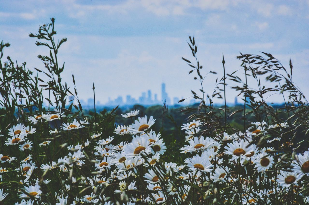 NYC (20 miles away) Flower Plant Nature Uncultivated Growth Wildflower Beauty In Nature Day Outdoors Sky Flowerbed No People Tree Landscape Springtime Rural Scene Fragility Flower Head Freshness The Great Outdoors - 2017 EyeEm Awards Nature City NYC Skyline Long Island