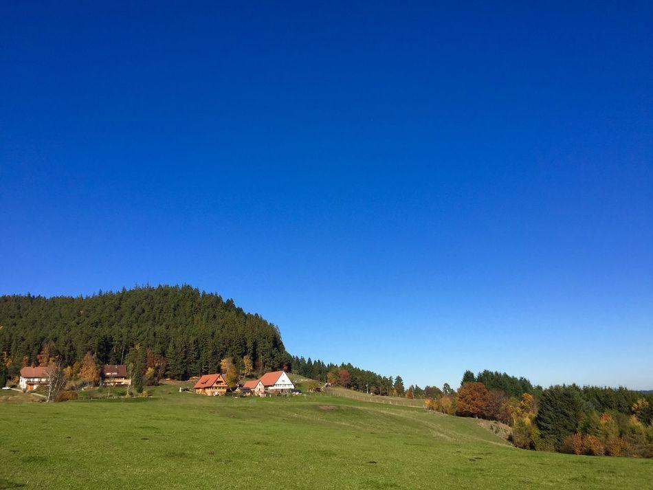 Sulzbacher Panorama Sulzbach Black Forest Blue Sky Schwarzwald Baden-Württemberg  Germany Beautiful Nature Walking Around Green Grass