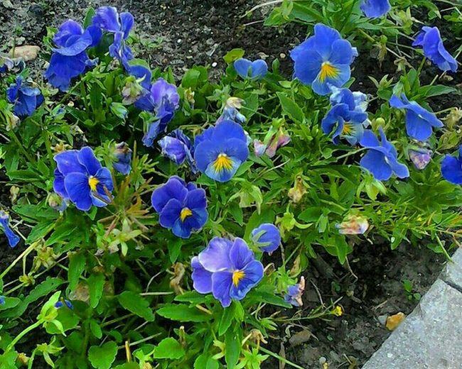 цветы Flowers Flowerporn Flower Photography Photooftheday Photo Photo Shoot Photoshoot Photo Hunting
