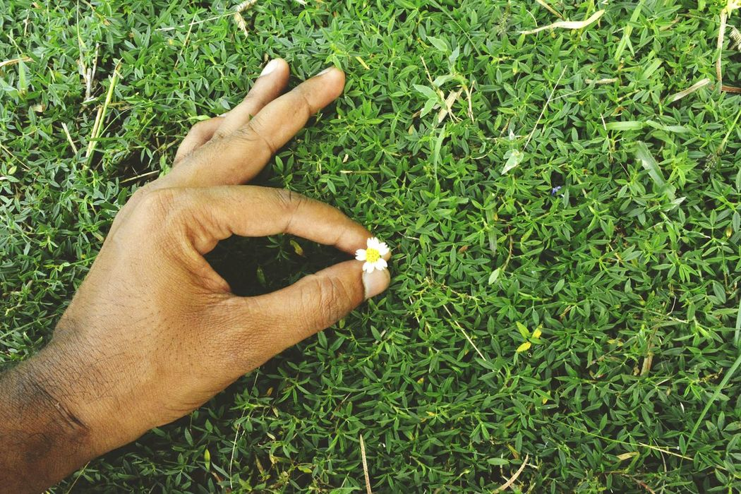 Grass One Person Green Color Human Body Part Personal Perspective Growth Human Hand Outdoors Real People Nature Day Men Close-up One Man Only Adults Only People Adult Green - Golf Course Maximum Closeness Week Of The Photo