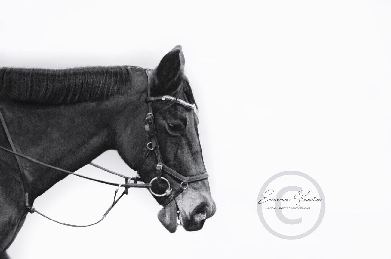 Love This image Horse White Background Working Animal Love First Eyeem Photo