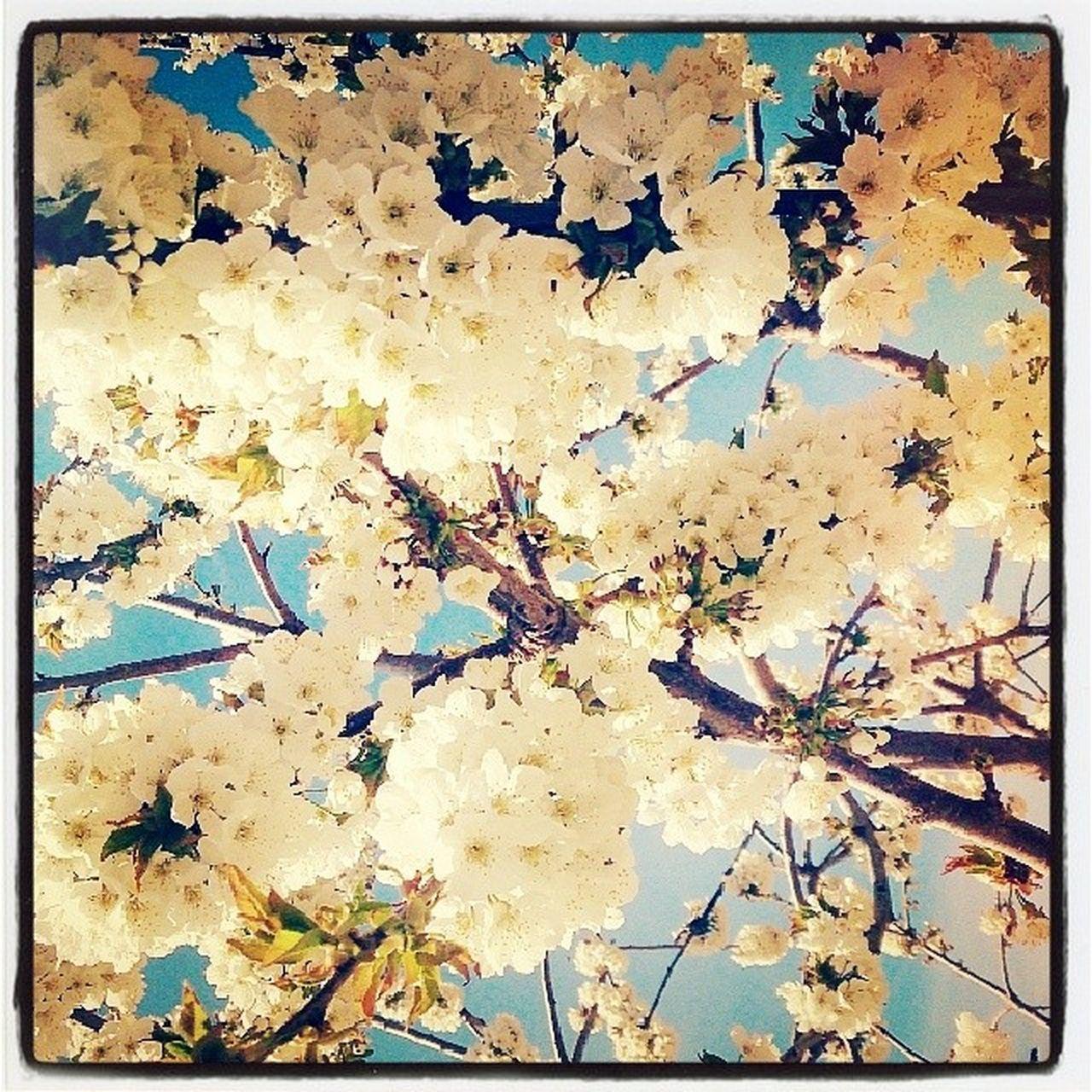 La primavera trompetera ya llego! Spring Bontemps Jaerahora Totdistreu Aixoesvida Aixoesfantastic Deuesgran Dimecres Feliçdianormal Moiaesmoltmoia Moiaesmoltmesqueundeute Tardesdedimecres