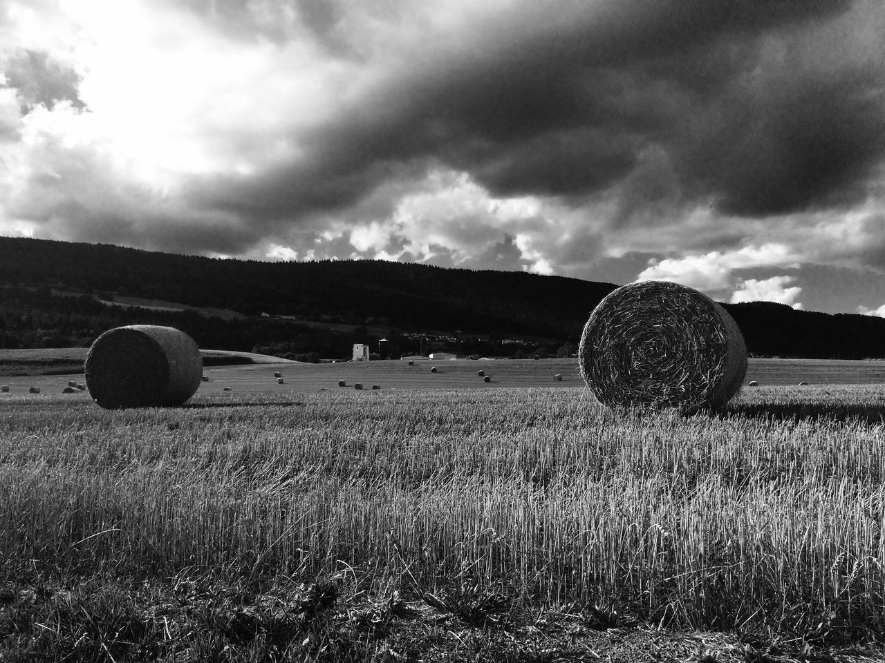 field, bale, agriculture, hay bale, harvesting, tranquil scene, tranquility, landscape, hay, rural scene, farm, grass, rolled up, sky, nature, outdoors, scenics, no people, beauty in nature, cloud - sky, day, tree
