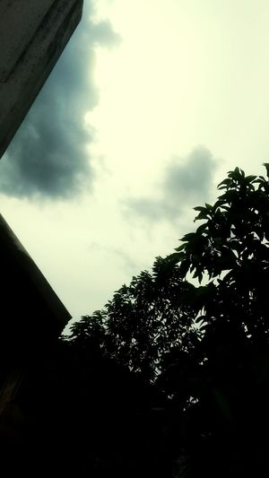 Travelling to thecore,new place with fresh start Sky Cloud - Sky Nature Tree Low Angle View Outdoors Day Frirendsforever Funalwys Capture The Moment Motog4plus First Eyeem Photo