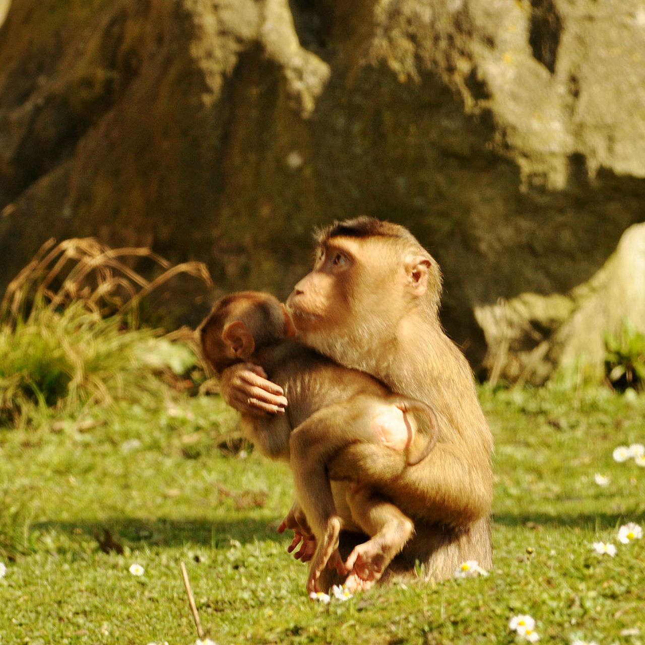 Affen Monkeys Animal_collection Animalphotography Animal Photography Animal Themes Zoology Zoo Animals  Zoo Animals In The Wild Wildlife Photography ZOOM Erlebniswelt Wildlife