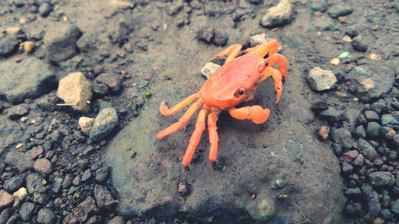 Crab Roadtrip Trimbakeshwar Trekking #travelling #sightseeing Nature