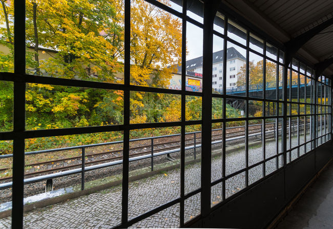 Architecture Autumn Autumn Colors Autumn Leaves Built Structure Day Greenhouse Growth Herbst Herbststimmung Indoors  Leaf Metal Nature No People Plant Protection Rails Station Sunlight Tree Window Windows