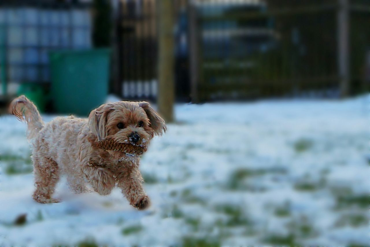 Dog Pets Pet Domestic Animals Animal Themes One Animal No People Outdoors Outdoor Fun Having Fun Outside Playing Playing Outside Blur Snow in Gera, Germany