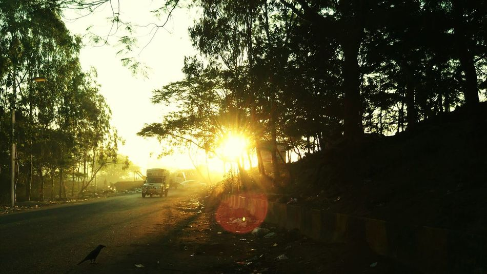 Traveling Home For The Holidays On The Way To Home Sunrise_Collection Streetside Crow Pune India_clicks Taking Photos