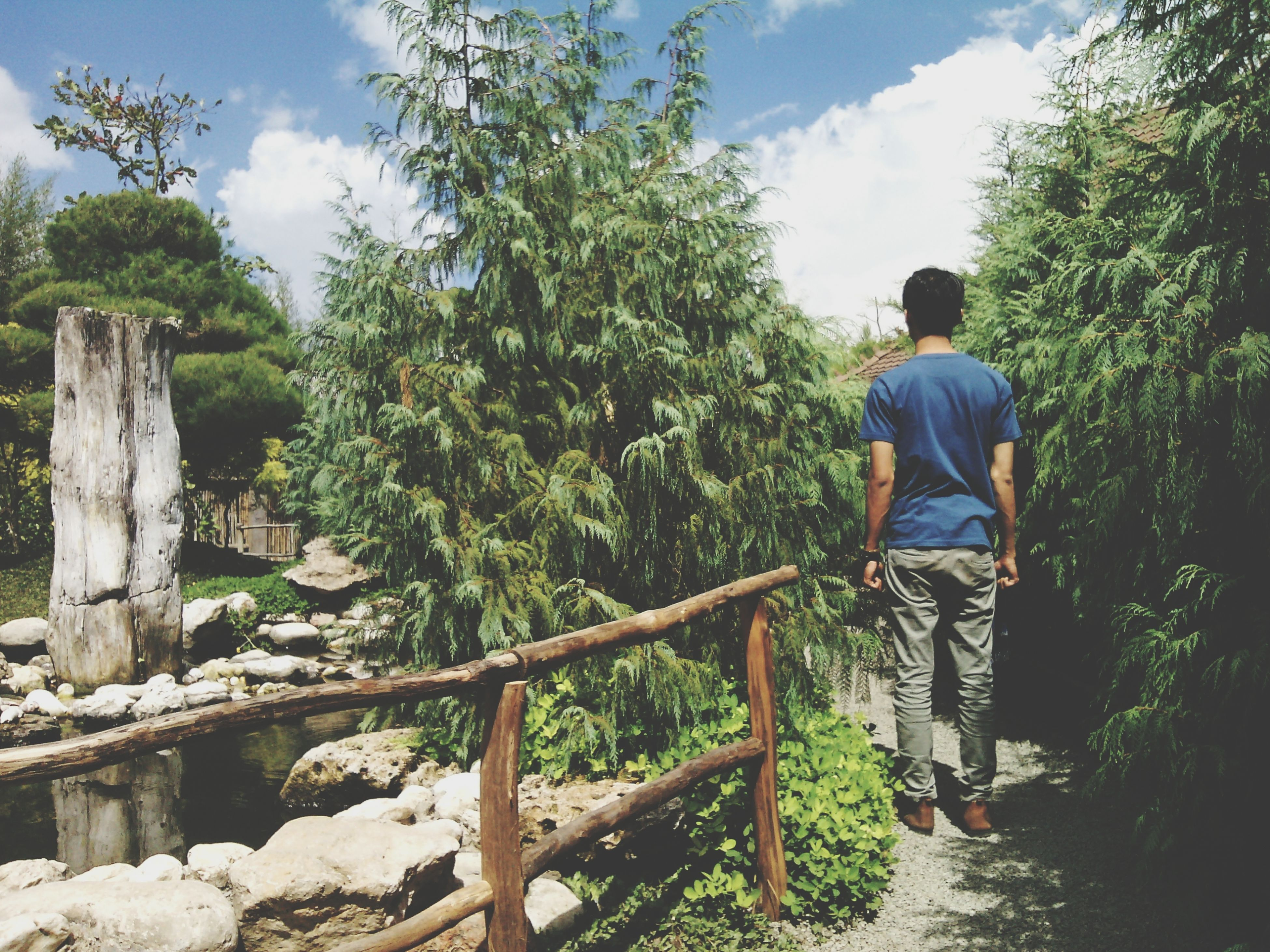 tree, lifestyles, leisure activity, rear view, full length, railing, casual clothing, men, sky, standing, person, nature, tranquility, wood - material, sitting, day, water