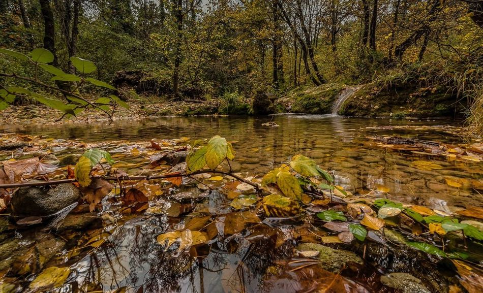 Au bord du Caramy, Provence Tranquil Scene Forest Nature Water Leaf Autumn Tree Outdoors Stream - Flowing Water