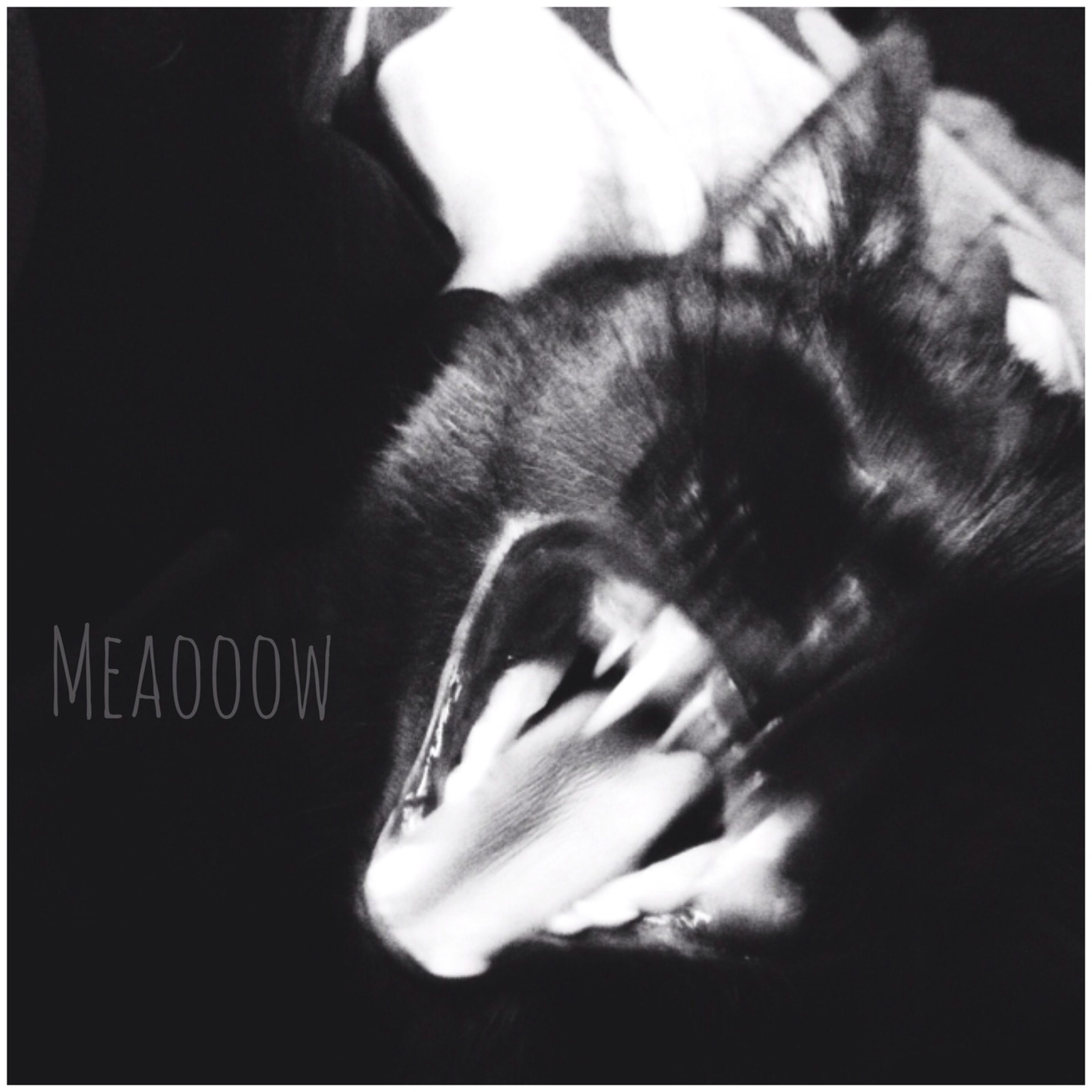 Meaoooow