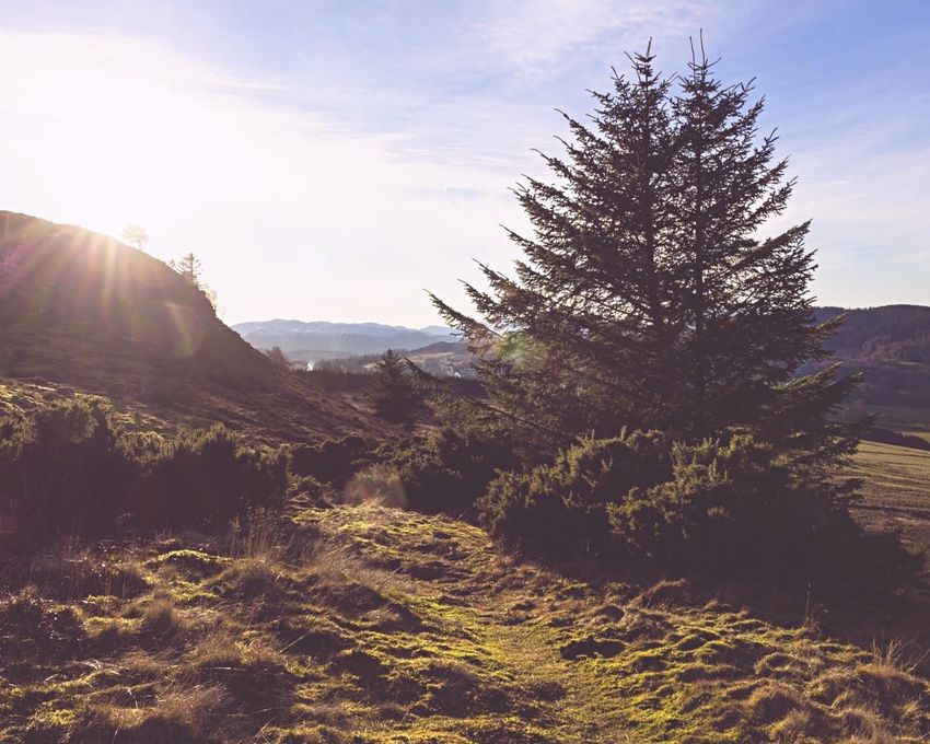 Tree Hiking Mountains Walking Around Scotland Highlands EyeEm Gallery Landscape_Collection Scottish Highlands