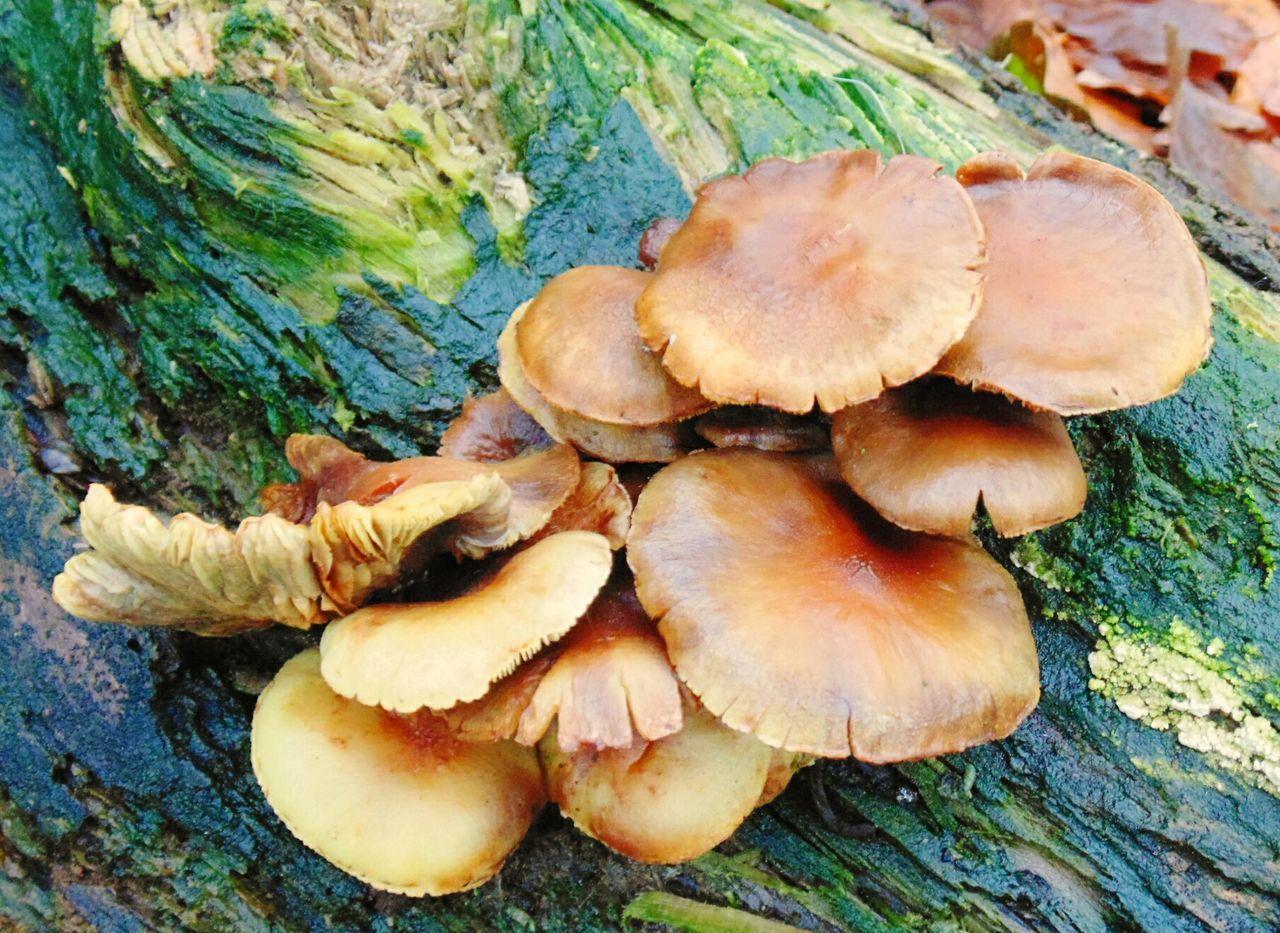 Fungi Log Rotten