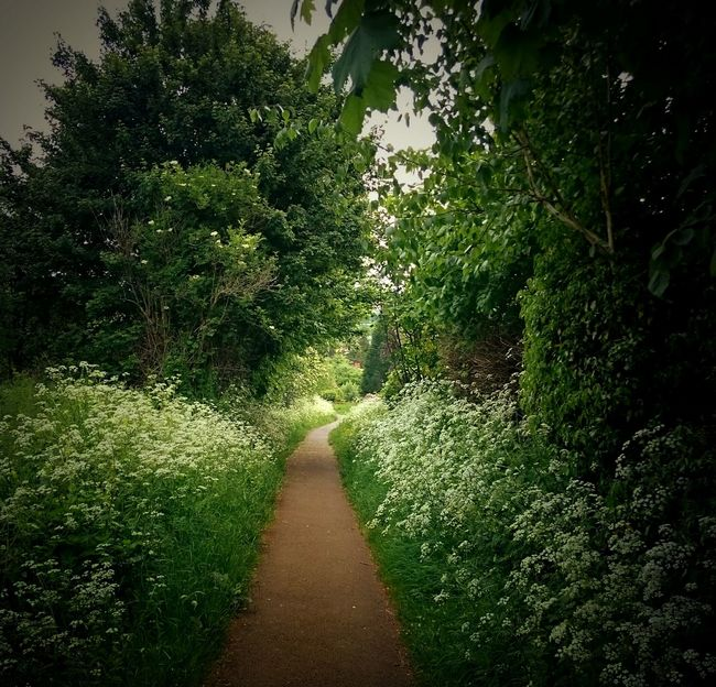 Hanging Out Taking Photos Cowparsley Beautiful Nature Fromwhereistand Beauty In Nature Weeds Are Beautiful Too Overgrown Pathway Path Pathswewalk Trees Landscape Blockley