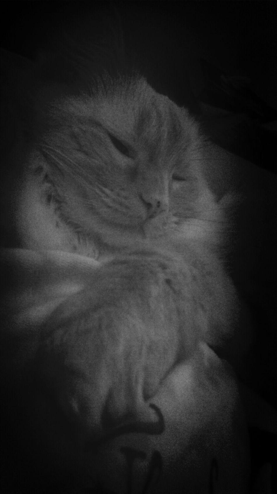 Cat Lovers Lazy Cat