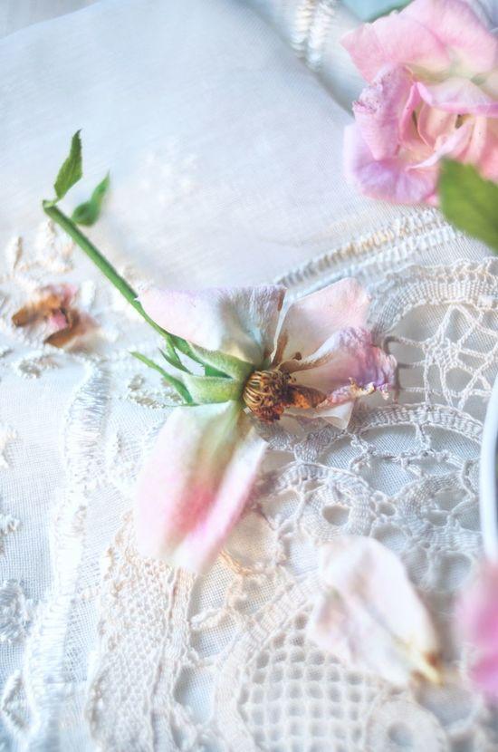 Нежность Flower Pastel Colored Rose🌹 Pink Color Pink Rose роза нежность кружево винтаж салфетки предметнаясъемка цветы