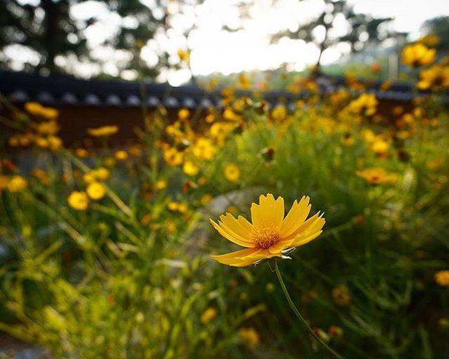 2016.05.31 봉은사에서 Picoftheday Photooftheday Daily Picture Photography Photo Photos Pic Pics Instalike Instagood Instapic Instagram Instamood Instacool Instalove Flower Flowers Flowerstagram 일상 일상스타그램 출사 기다림 사진 데일리