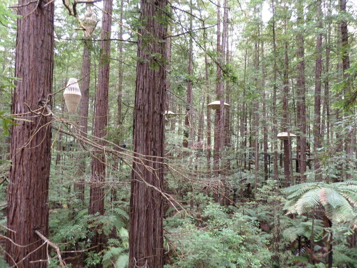Lampshades in the wood Day Forest Nature No People Outdoors Pine Tree Scenics Tree Tree Trunk WoodLand