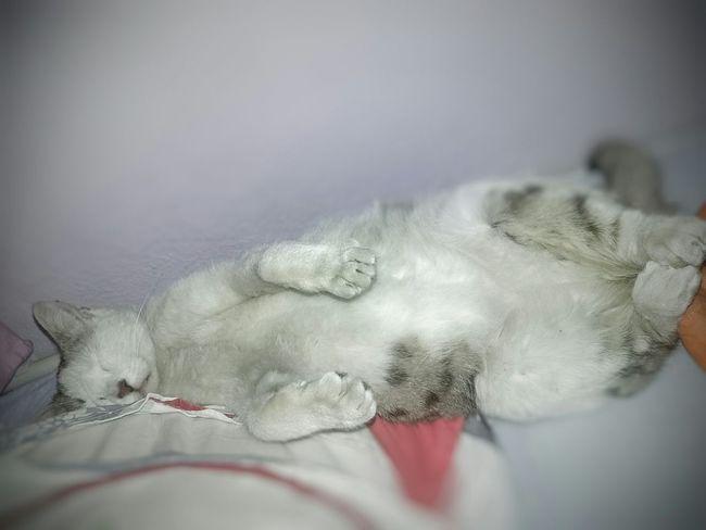 Beyaz Kedi Kirli Animal Love 😄😊😊😊🐈🐱