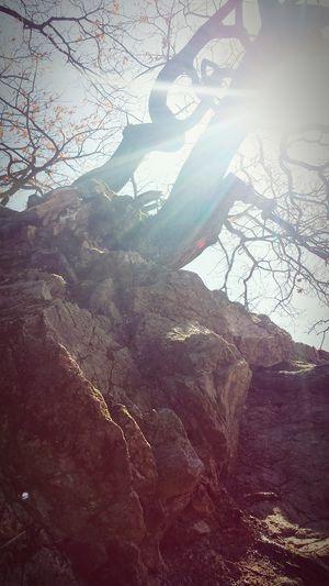 Hugging A Tree Tree And Sky