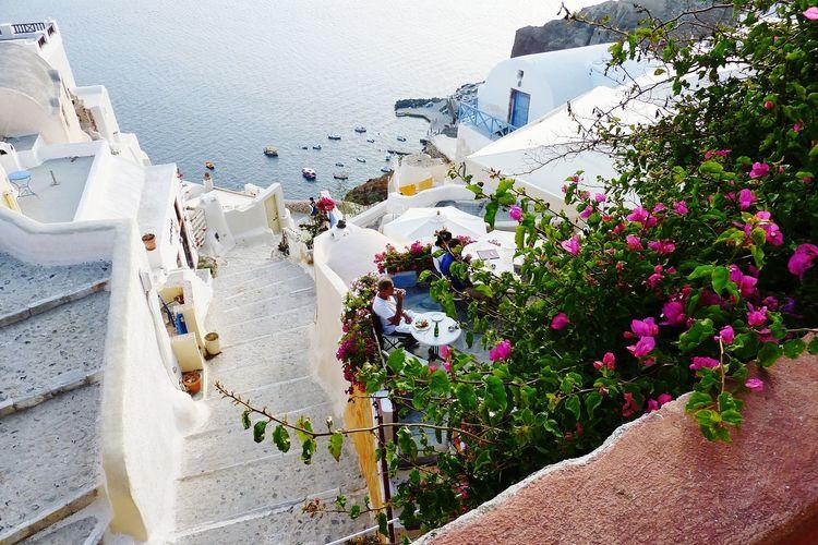 Greece Flower Nature Plant Santorini Oia Traveling Travel Destinations Beautiful Scenery