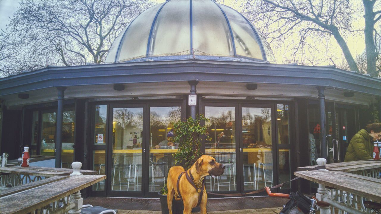 Beautiful stock photos of great dane, Animal Themes, Architecture, Building Exterior, Built Structure