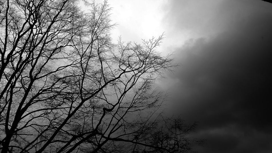 Nature Beauty In Nature Sky Day No People Low Angle View Tree Cloud - Sky Dark Blackandwhite Photography