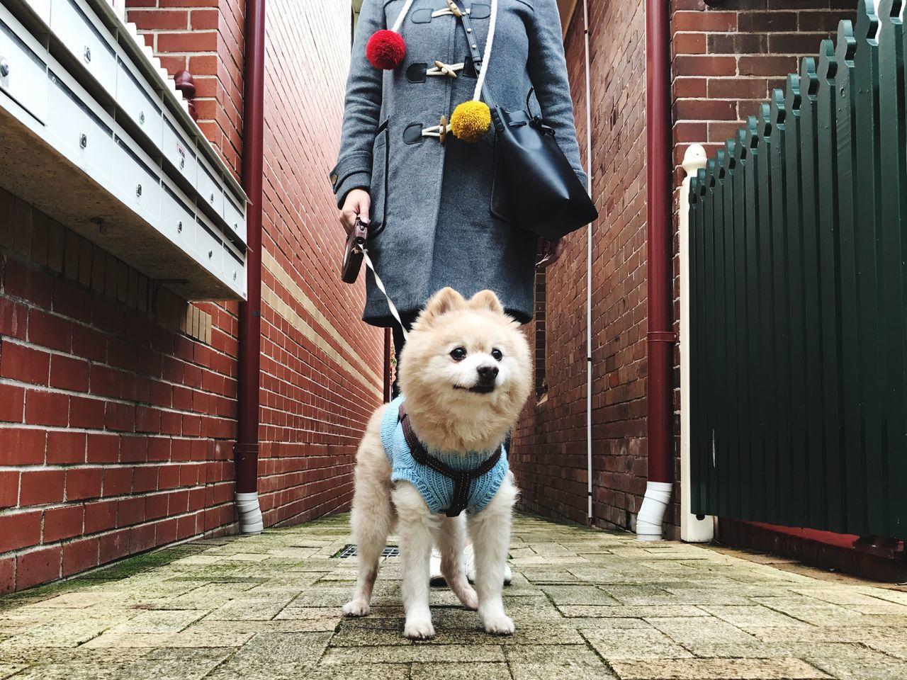 Sunday Walk with My Boy 🦁 | Self Portrait My Dog Is Cooler Than Your Kid. | Mansurgavriel Gorman Ootd