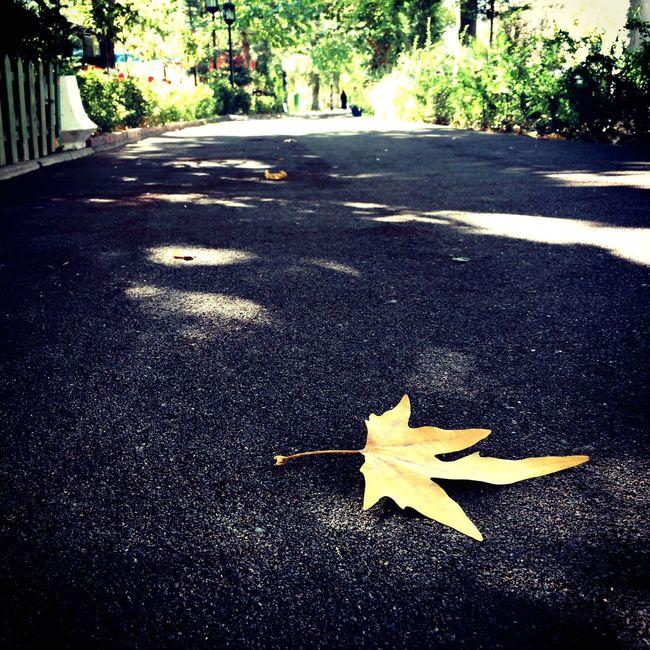 Severekçekiyoruz Objektifimden Sonbahar Leaf Photooftheday Gununkaresi