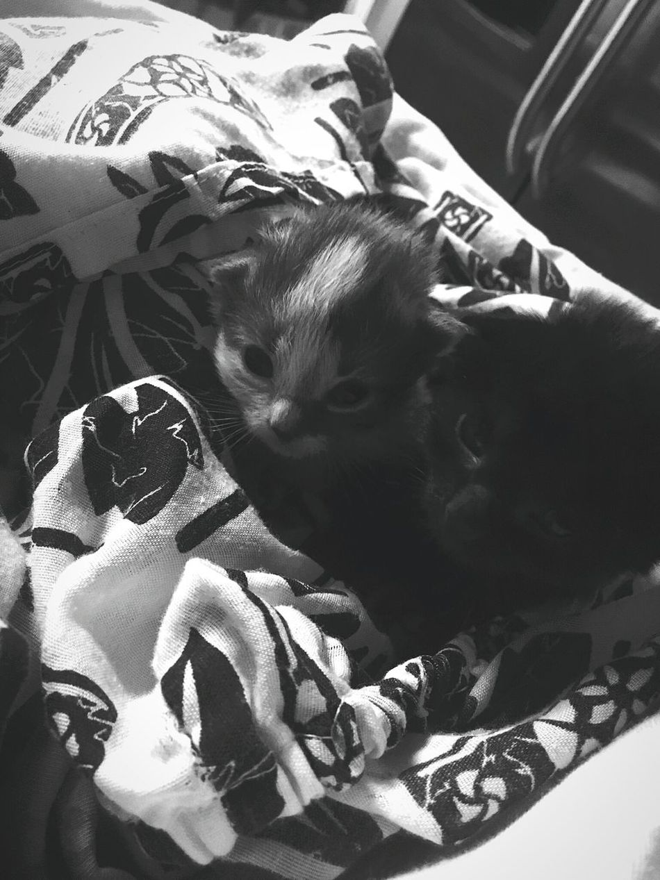Nuzzled. Kitty Sisters Cuddle First Eyeem Photo