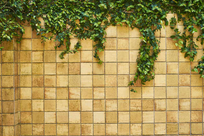 Architecture Architecture_collection Close-up Green Green Color Growth Nature No People Plant Wall Wall Wall - Building Feature