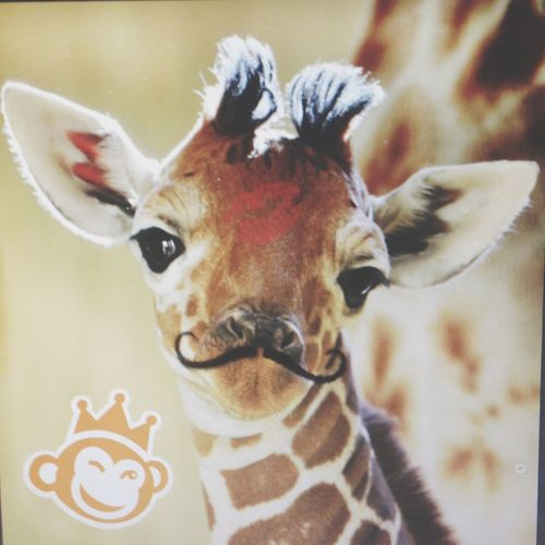 What happens in photgraghy class....gets posted on EyeEm ? Babygiraffe Omg Mustache