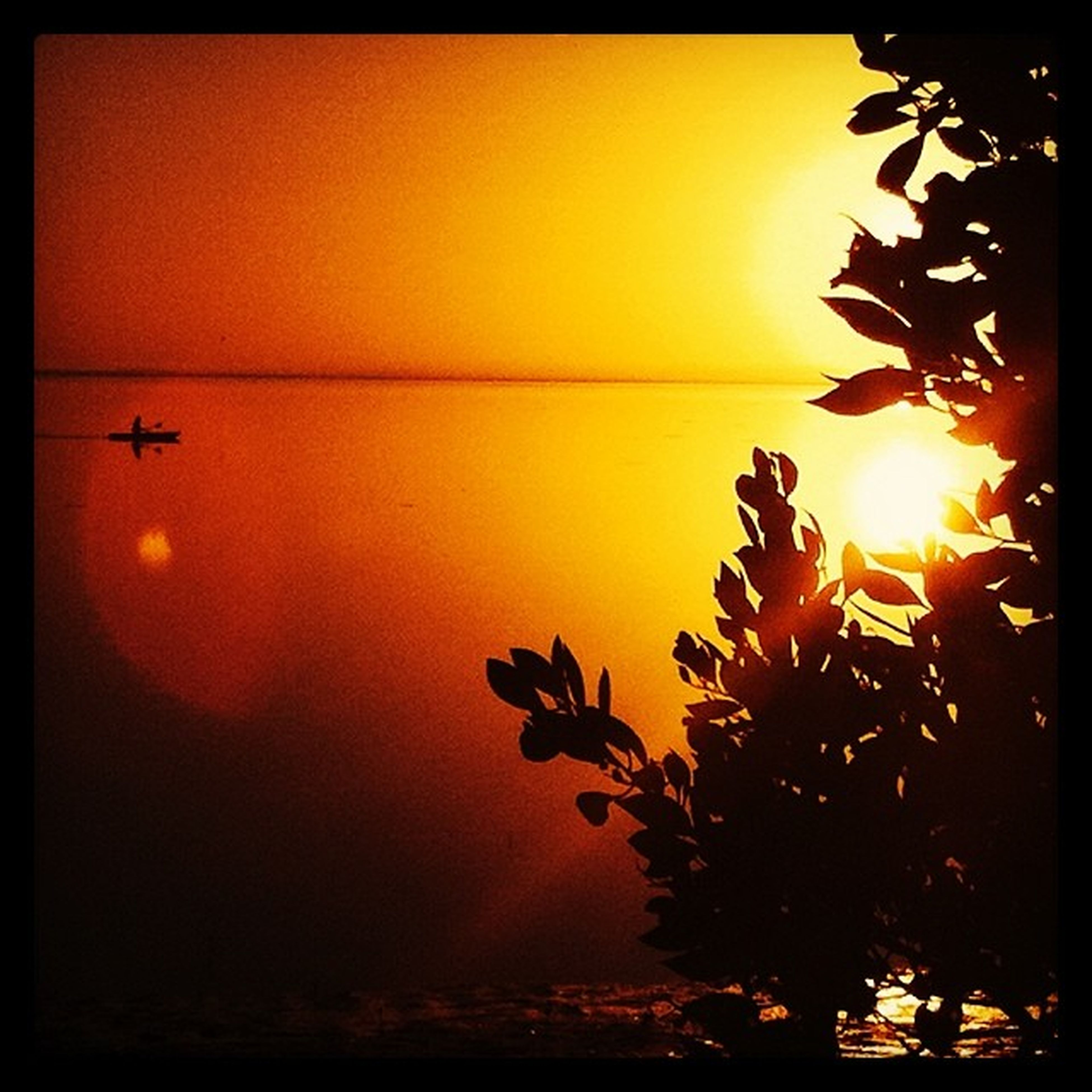 sunset, transfer print, sun, orange color, auto post production filter, silhouette, beauty in nature, scenics, sea, sky, nature, horizon over water, sunlight, tranquility, tranquil scene, water, tree, idyllic, growth, outdoors