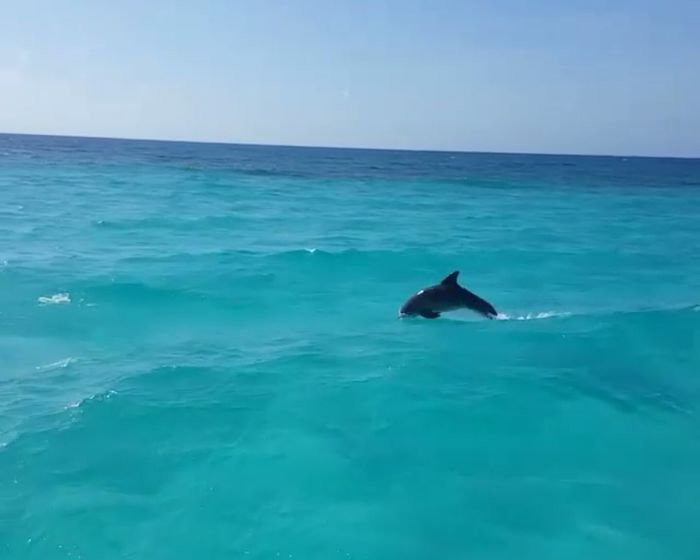 Playa cielo, cozumel... Beach Dolphins Cozumelmexico Playa Beach Photography Discovery Discoverychannel