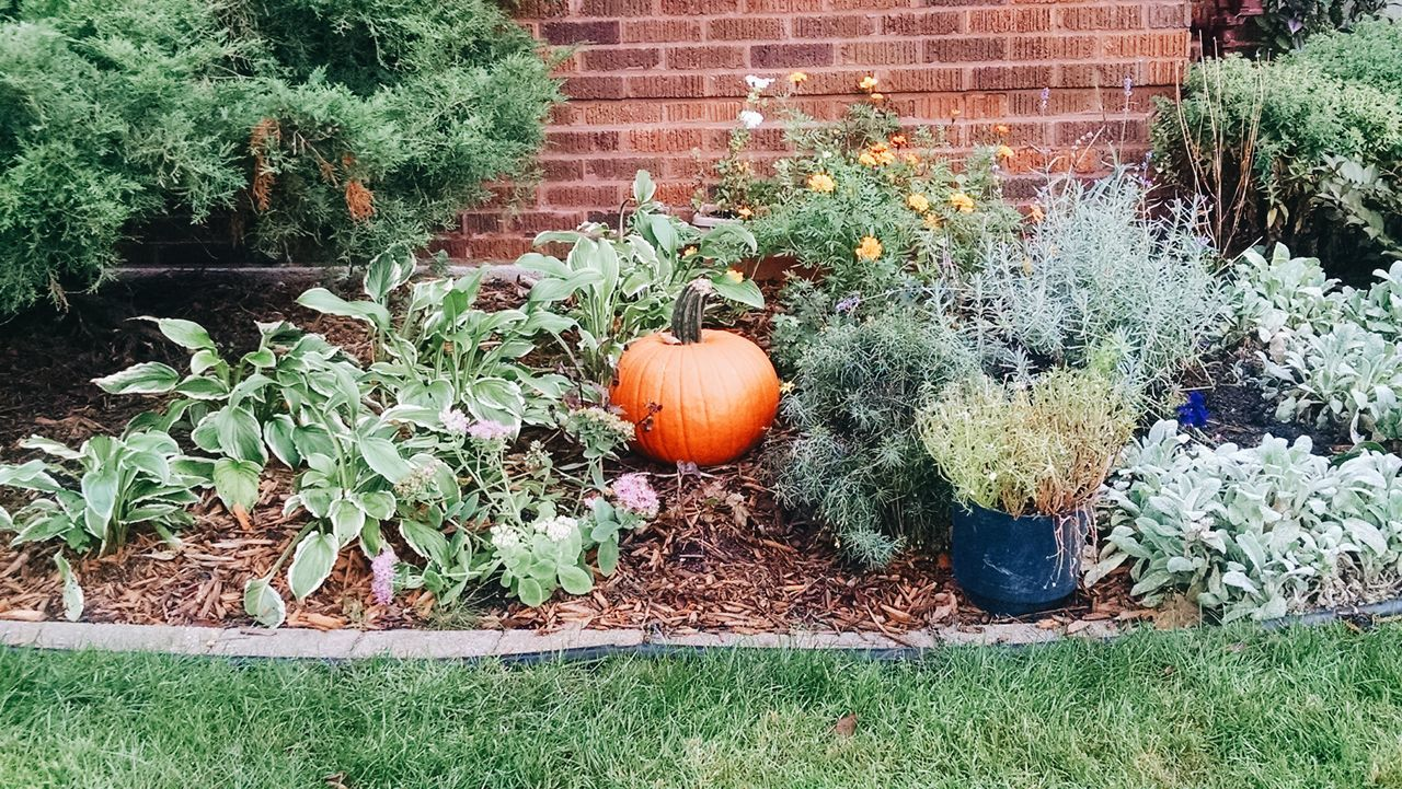 Beautiful stock photos of pumpkin, Autumn, Brick Wall, Bush, Chicago