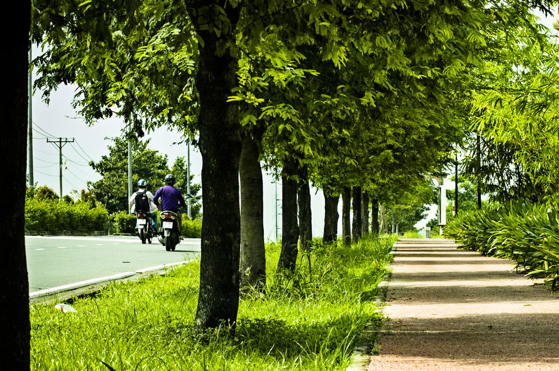 Beauty In Nature Check This Out Countryside Day Diminishing Perspective Grass Green Green Green Color Green Way Growth In A Row Narrow Nature Park - Man Made Space Pathway Shadow Cast Shadows & Lights The Way Forward Tranquil Scene Tranquility Tree Tree Trunk Treelined Vietnam