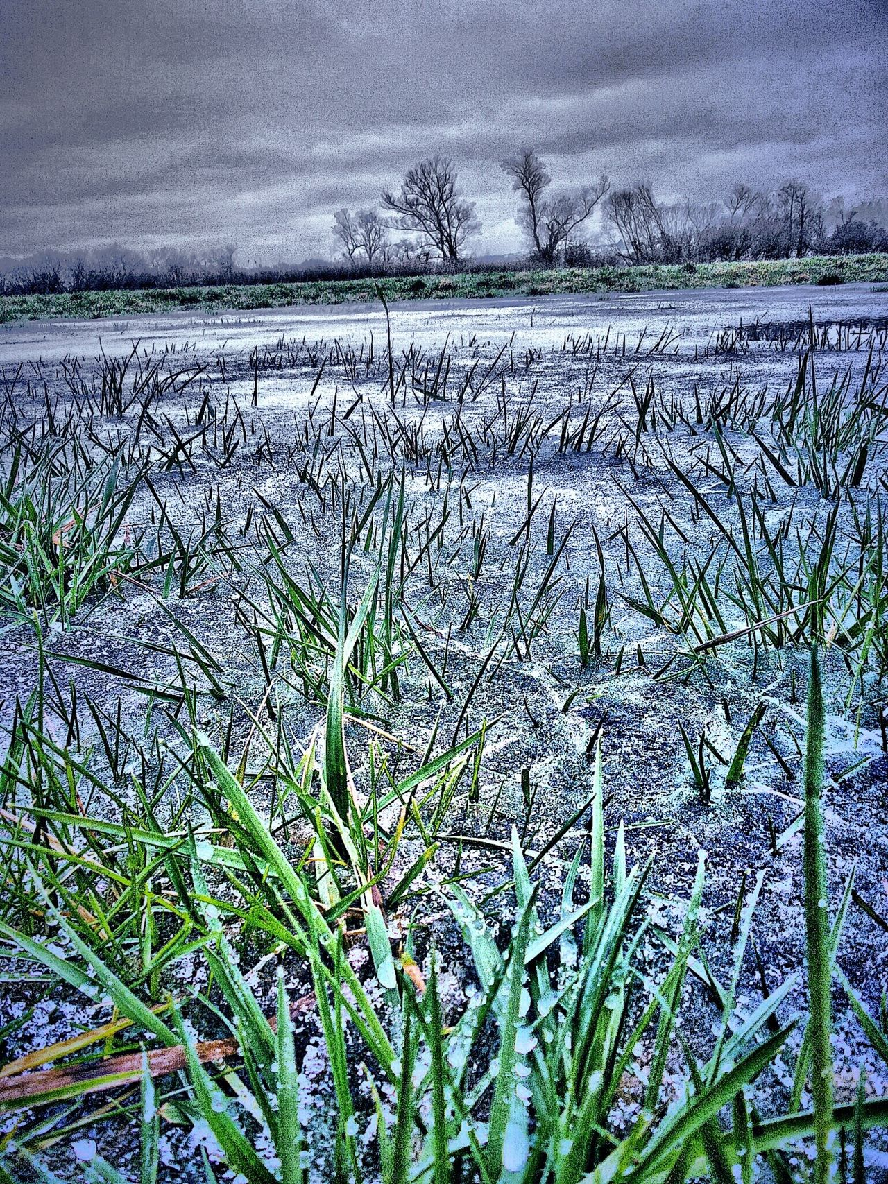 Frost Cold Freeze Early Winter icycold Green Grass Growing Through Ice Growth Agriculture Nature Field Rural Scene Beauty In Nature Outdoors Close-up Fragility No People Kinzig Auen Langenselbold Germany🇩🇪