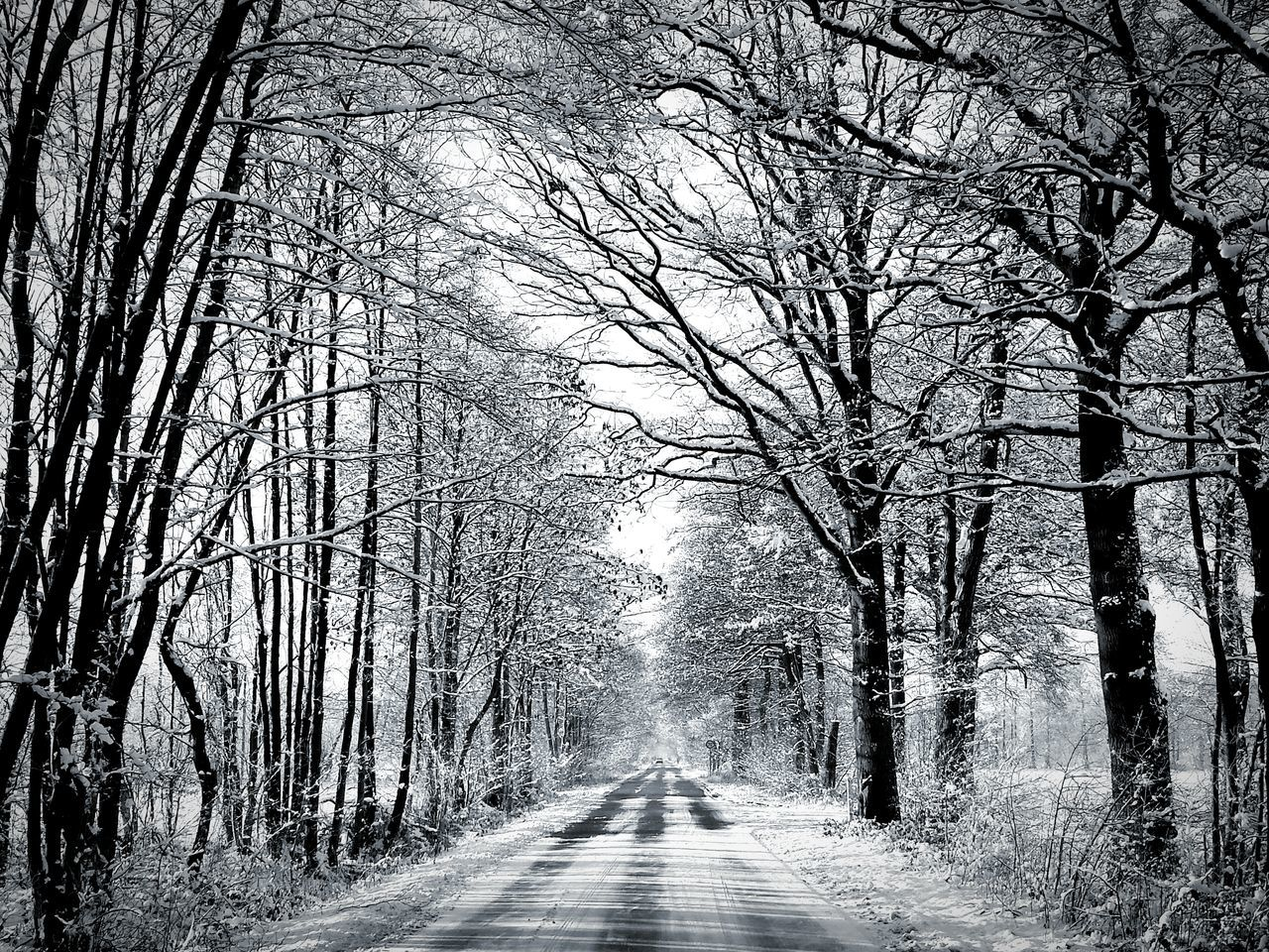 The Way Forward Trees And Bushes The Way Forward Beauty In Nature Tree Transportation Road Diminishing Perspective Tranquil Scene Vanishing Point Bare Tree Tree Trunk Tranquility Non-urban Scene Scenics Nature Branch Day Treelined WoodLand Growth Outdoors Beauty In Nature Black And White Black And White Edit