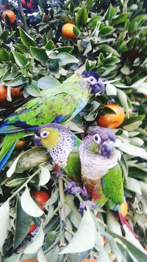 Parrot Tree? For The Love Of Birds Bird Photography my pets
