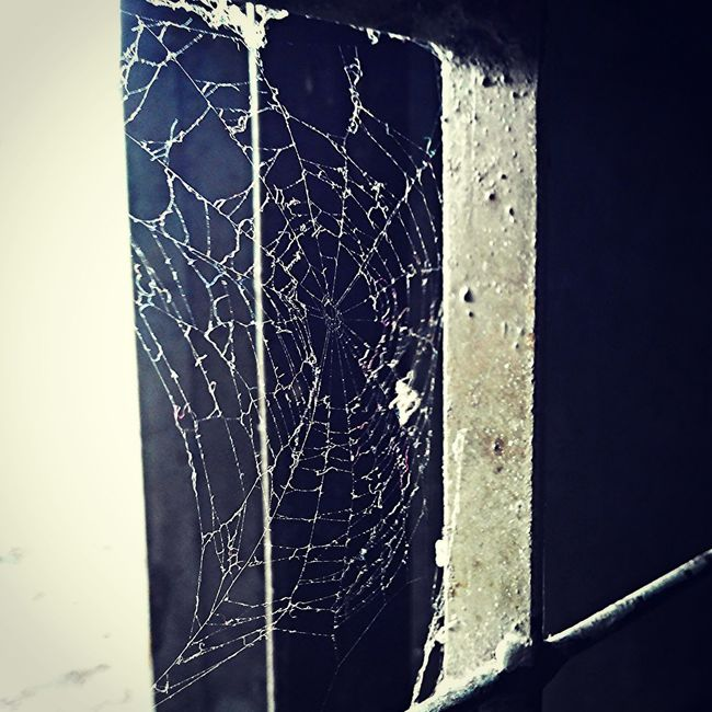 Window Spider net Angry eyeem photo Hunting Life Natural Spider Net Mobilephotographi